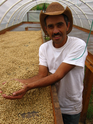 Man in a green house full of coffee beans